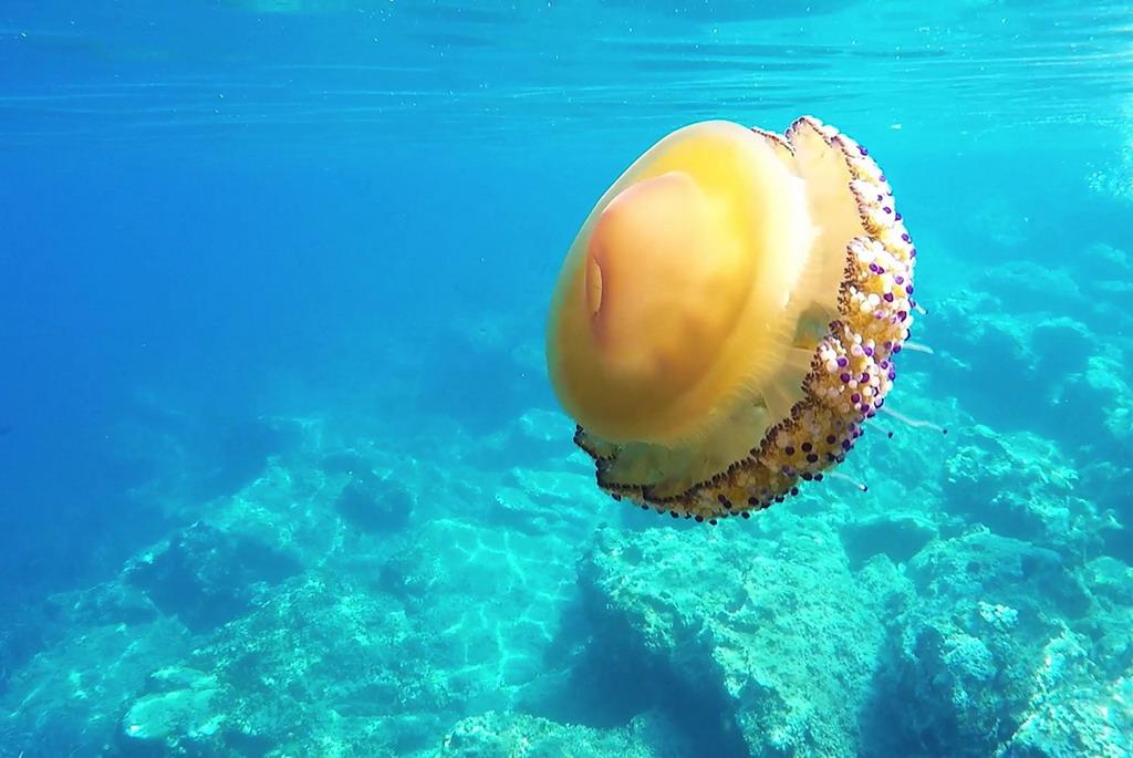 Apel sugrađanima koji letuju u Grčkoj - ne vadite meduze iz vode!