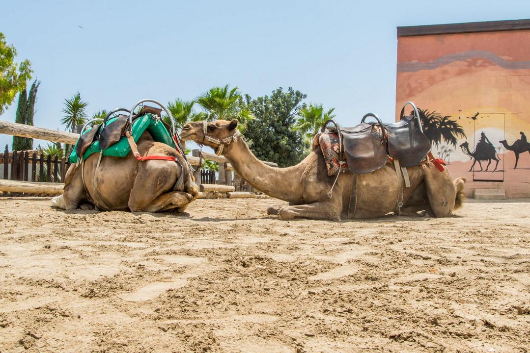 Posetite Park kamila u Larnaki na Kipru