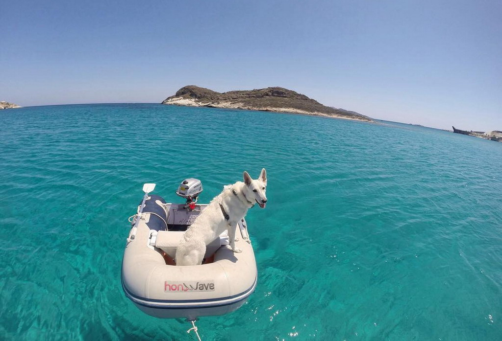 Jedna lepa kratka priča iz Grčke za sve ljubitelje životinja