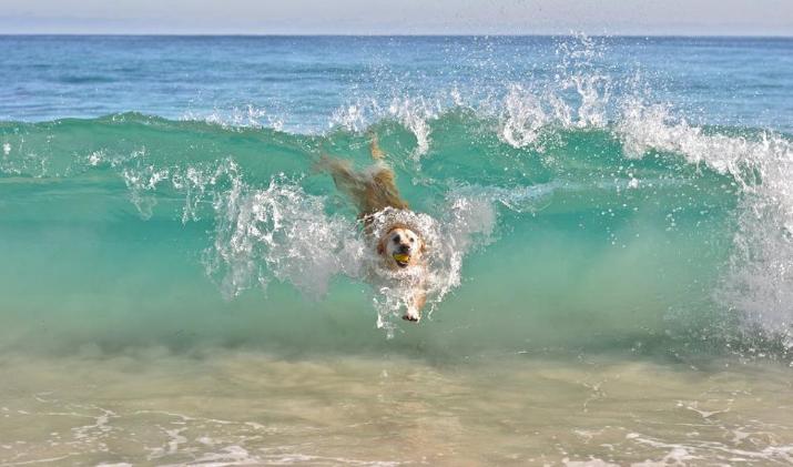 U Grčku sa psom