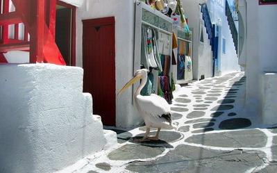 Pelikan Petros - maskota Mikonosa