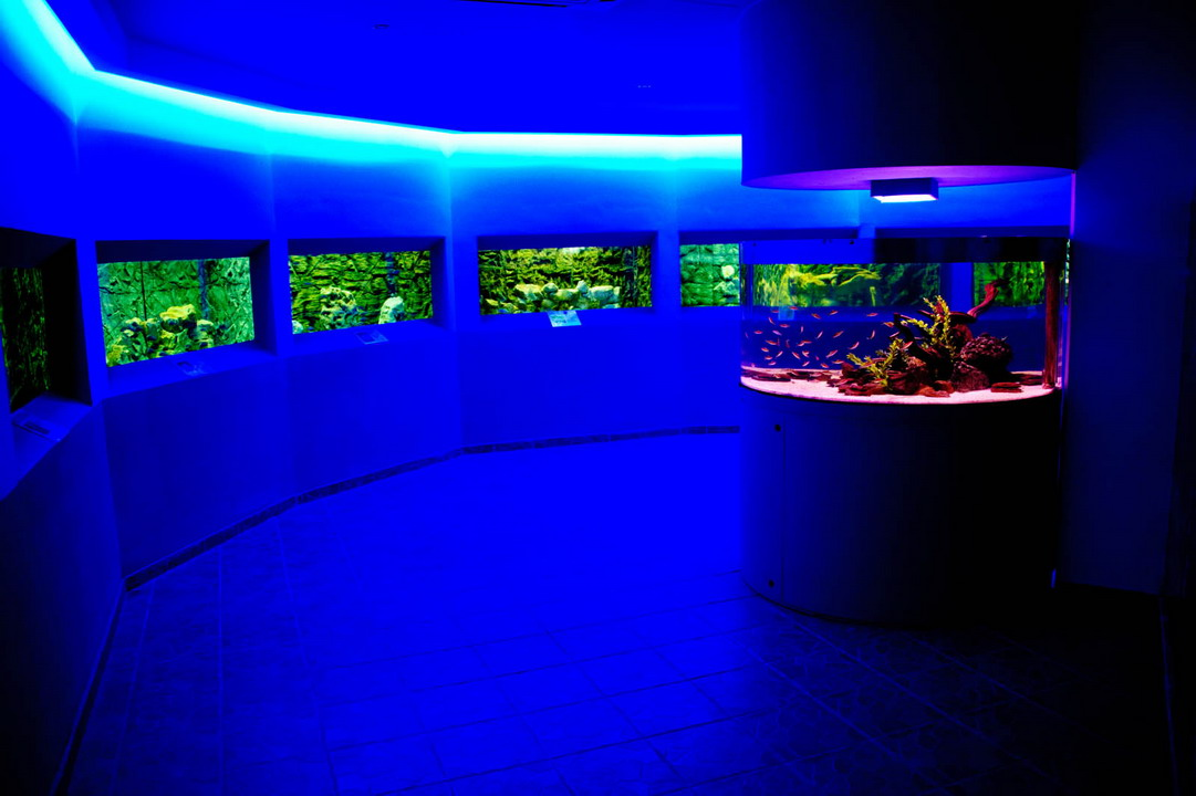 Ocean Aquarium Park u Protarasu na Kipru